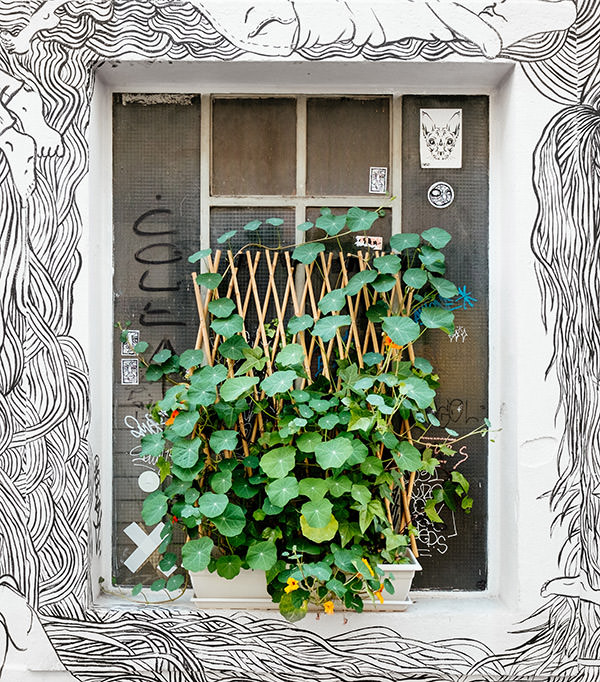 ivy-office-plants