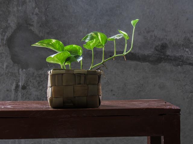 pothos-office-plants